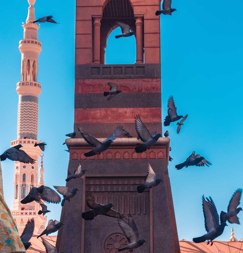 IGP Blog: Botschaft des Islam