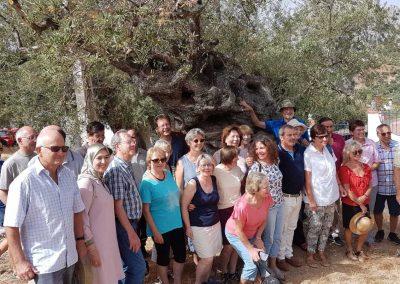 In Andalusien unter einem 800 Jahre alten Olivenbaum